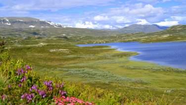 Visit the majestic mountains of Ål in Hallingdal