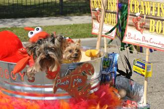 Crawdoggys at the Mystic Krewe of Mardi Paws parade in Mandeville