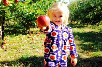 Apple Picking at Paulus Orchards