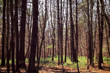 Mount Holly Marsh Preserve