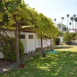 Large Backyard Home