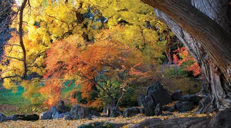 Fall Foliage - Unique Ways - Morris Arboretum