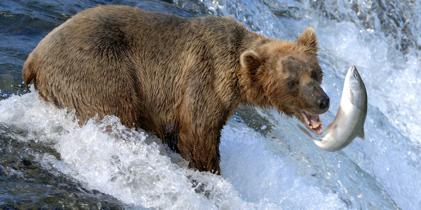 Katmai national park visit anchorage for Fish in alaska