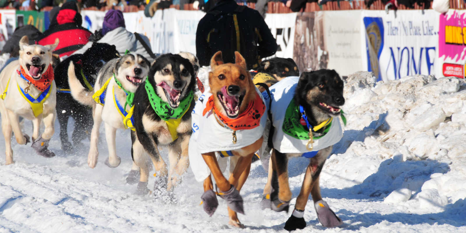 Iditarod Sled Dog Race Visit Anchorage