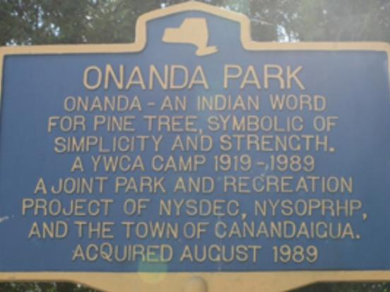 The canopy of trees at Onanda Park