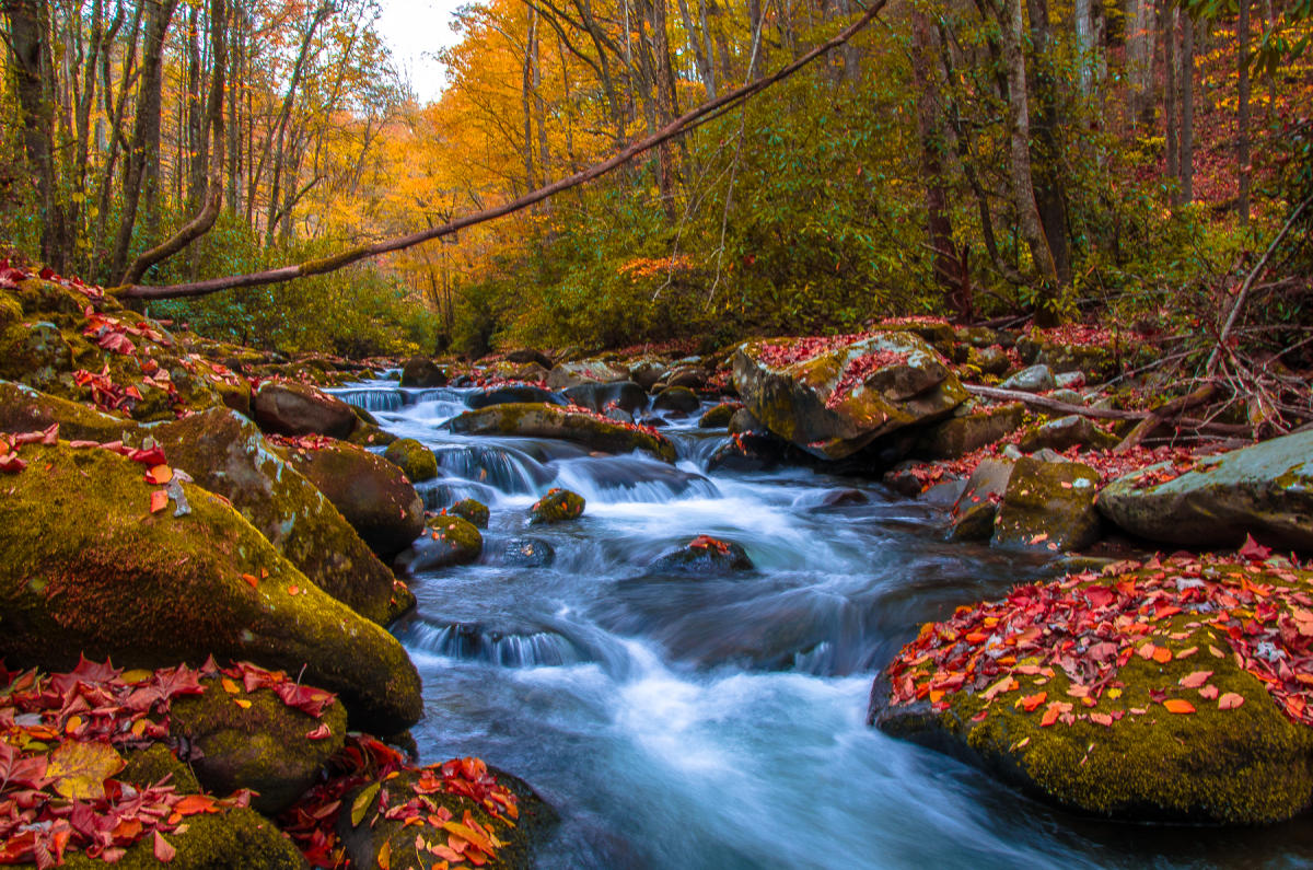 Find A Room During Fall Foliage