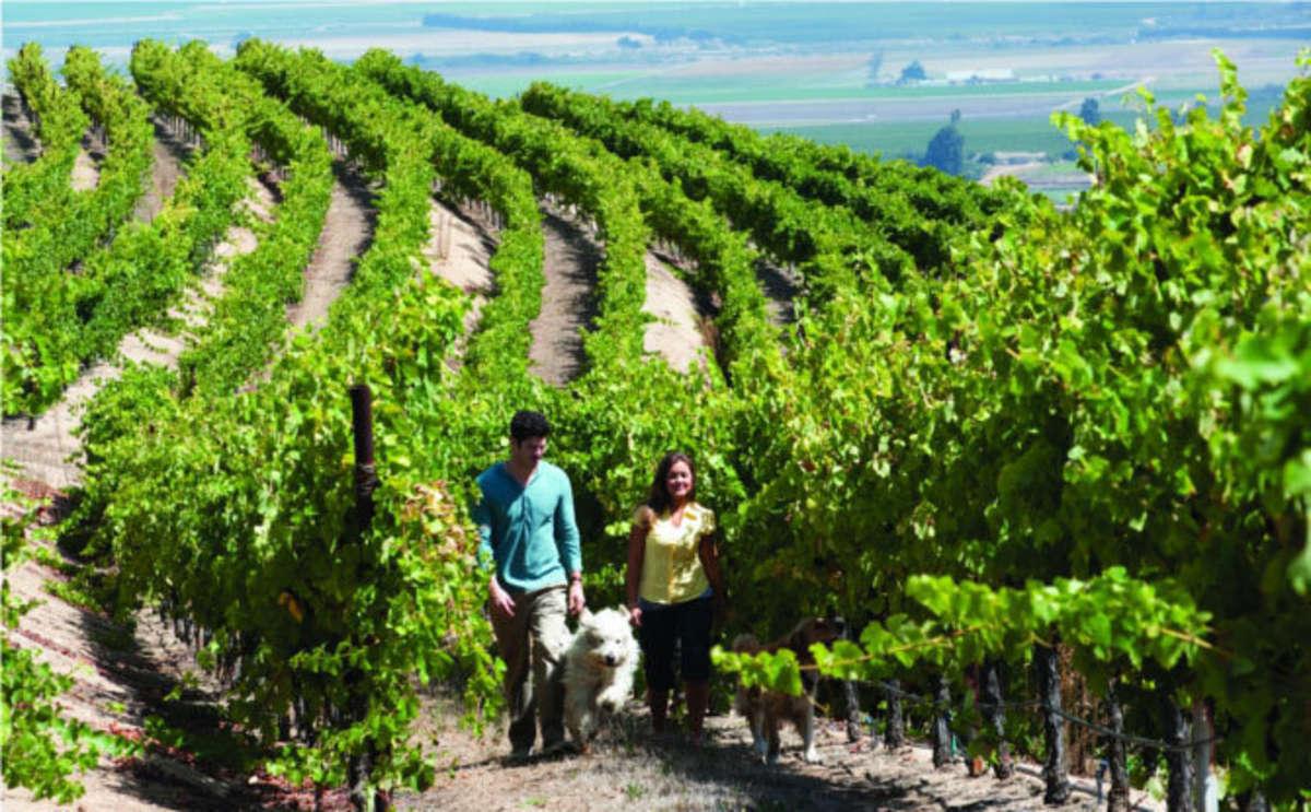 Paraiso Vineyards in Salinas Valley