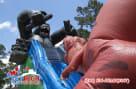 Gorilla Vs T-Rex Slide