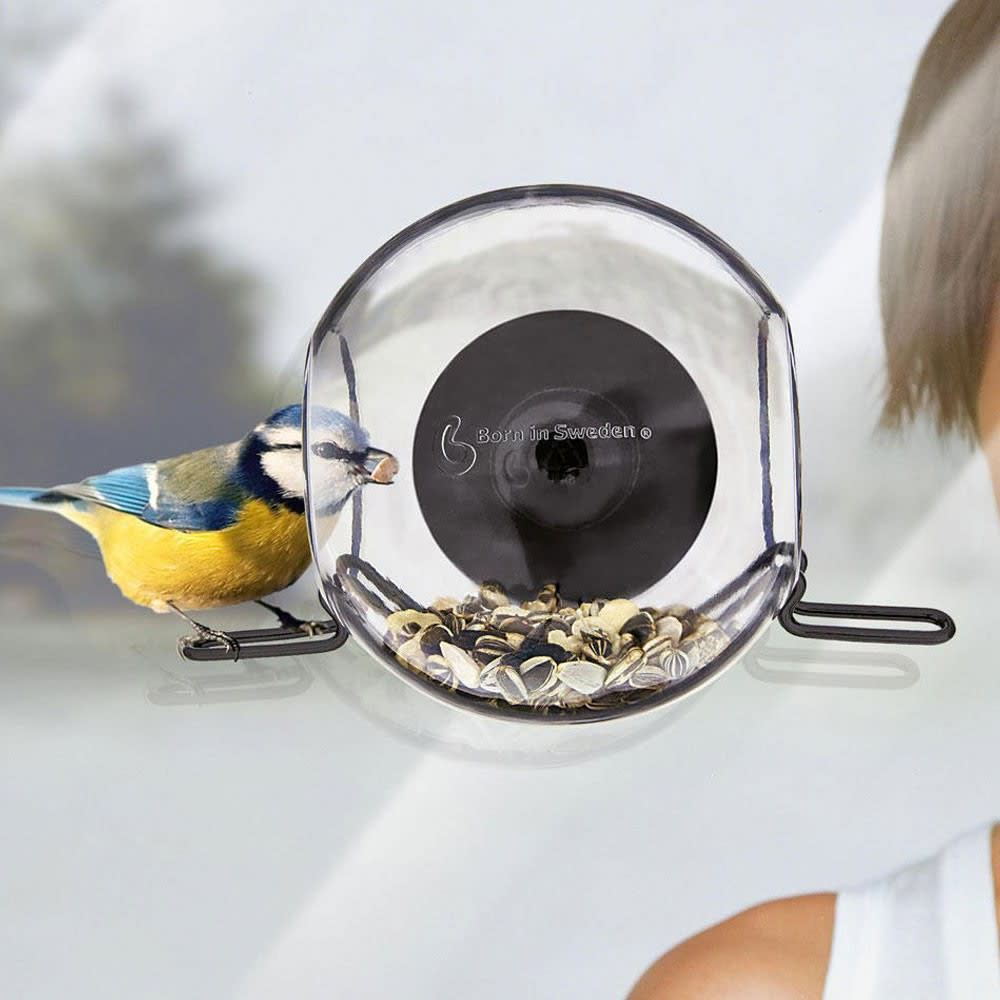 Born in Sweden Window Bird Feeder