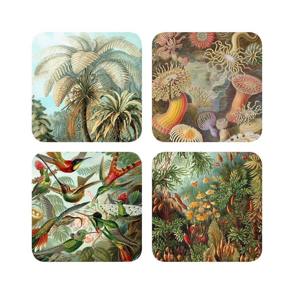 Haeckel Set of 4 Nature Coasters