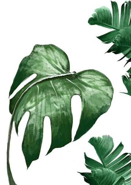 Room 356  Monstera Leaves Print A3