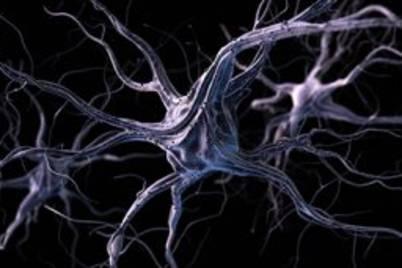 Neurones small 1 300x171