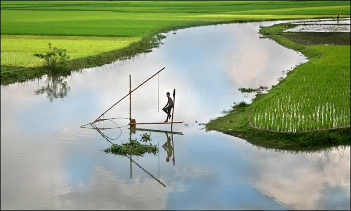 Fishing among rice fields in Bangladesh. The country could be the first where iron biofortified rice is released. Picture: Michael Foley/Flickr.
