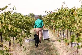 Wine Quality and Style in the Face of a Changing Climate