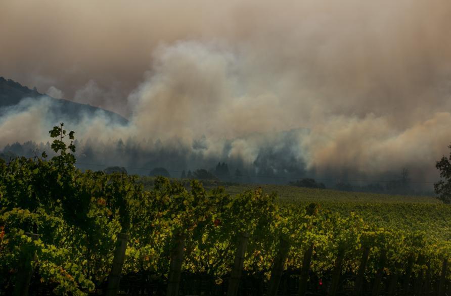 Using tech to save wine from bushfire smoke