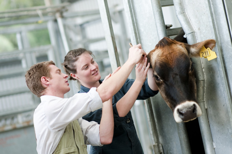 Future Veterinary Education