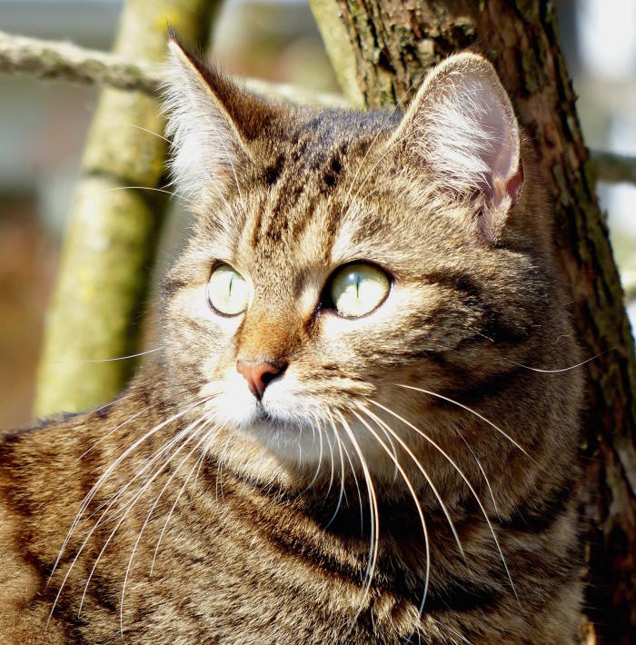 purpose of cat whiskers