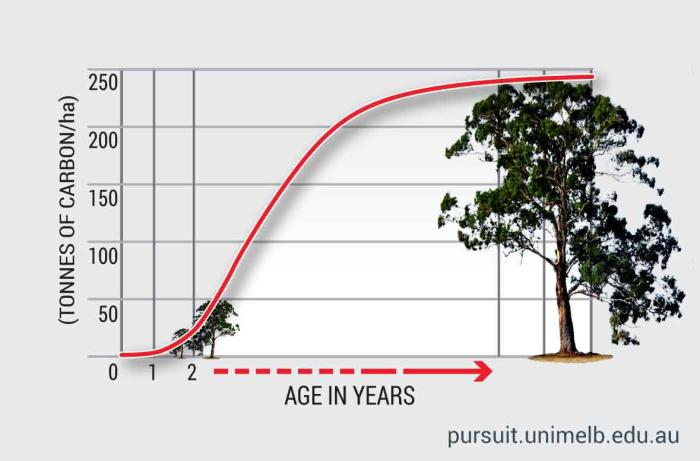 Carbon keepers: amount (in tonnes) sequestered by one hectare of trees over their lifetime. Research: Hugh McMaster. Graphic: Frank Maiorana