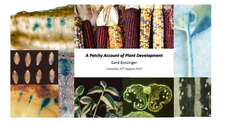A Patchy Account of Plant Development