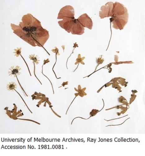 Australian Identity Through Cultural Materials Conservation