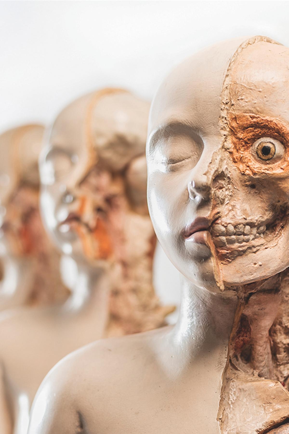 Bones of contention | Pursuit by The University of Melbourne