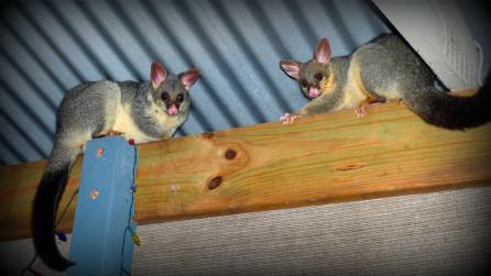 howto stop possums eating my garden