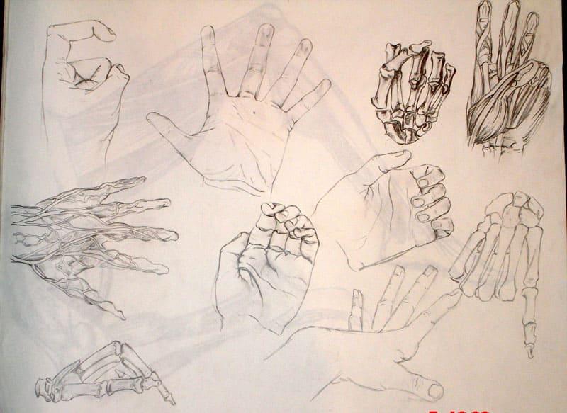 Anatomical Study -hands