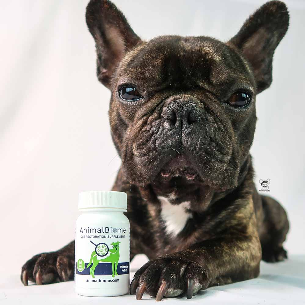 Replenishing Your Dog's Gut Health - Our Experience