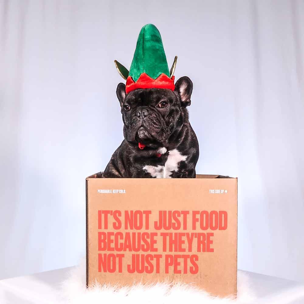 Fresh Dog Food Delivered To Your Door