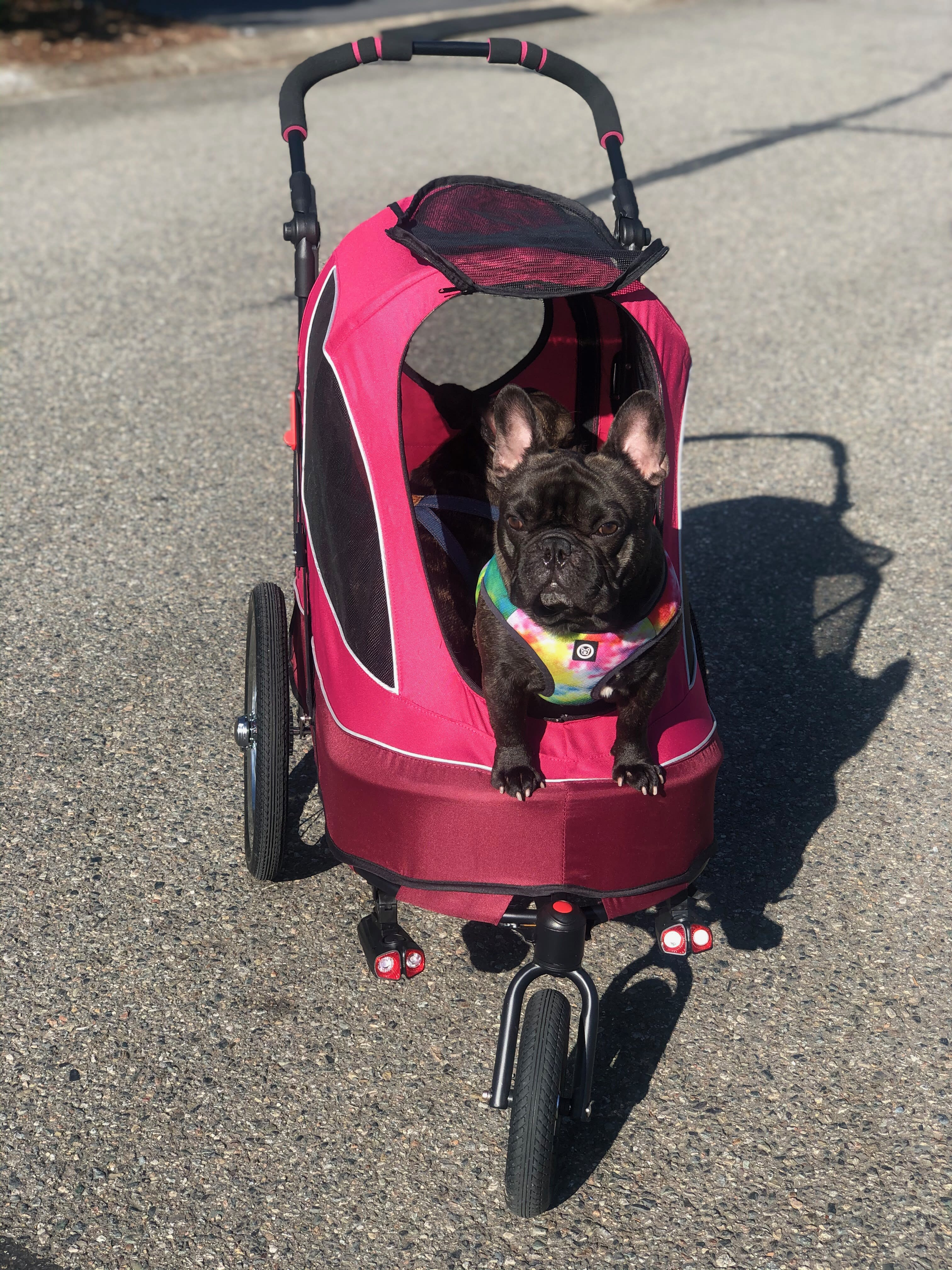 The Only Pet Stroller You Need