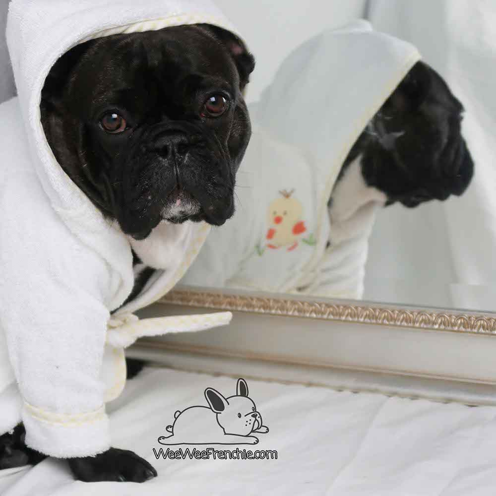 Cleaning Your Dog's Wrinkles
