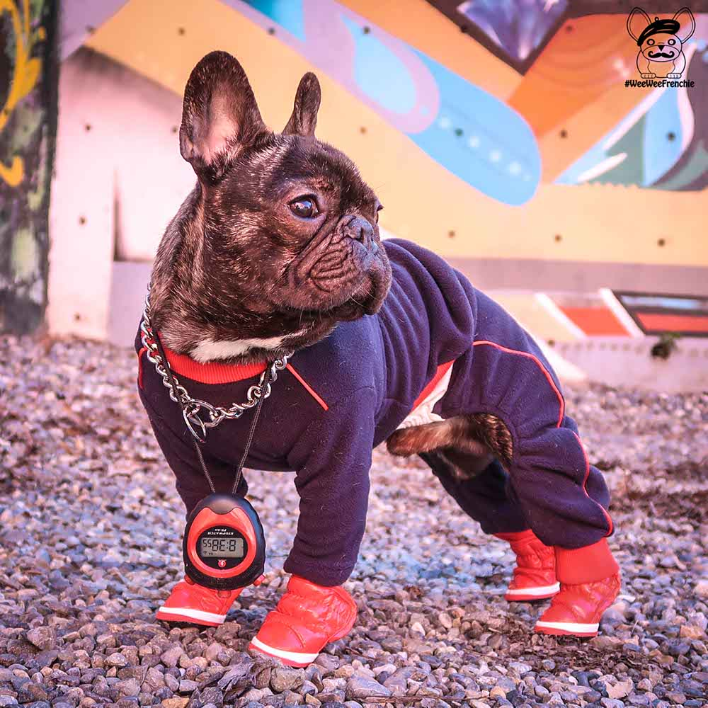 Miamore Pets - Track Suit Product Review