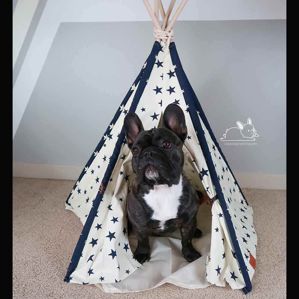 Stylish Pet Houses but Are They Safe for Your Dog?