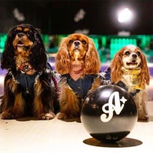 Dog Parent Bowling League