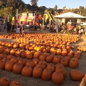 Pumpkin Station