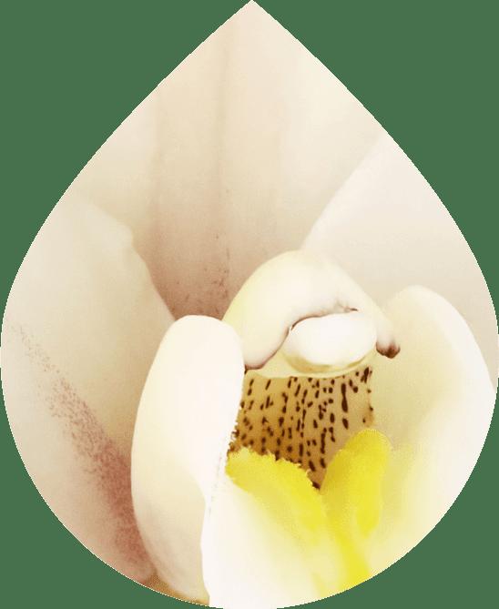 Infused Vanilla