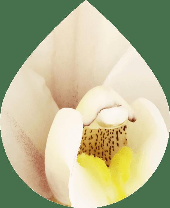 Vanilla Medley